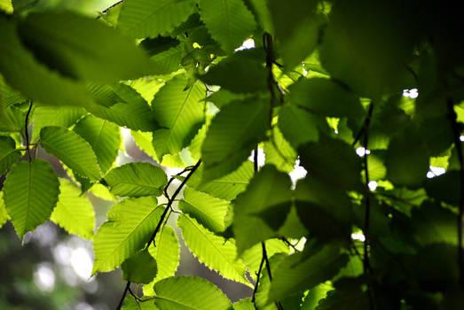Hiding Under Leaves