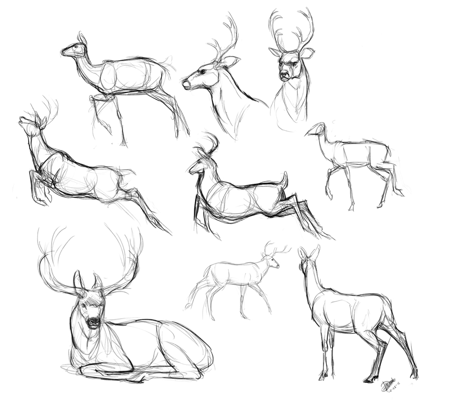 Line Drawings Of Animals Deer : Deer sketches by nadiavanderdonk on deviantart