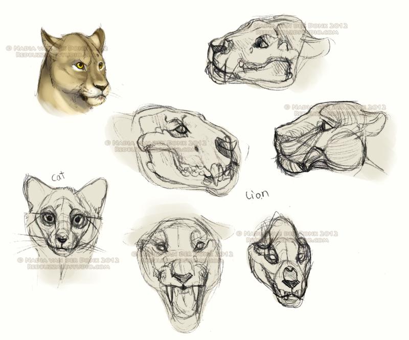 Lion Skull Study Sketches By Nadiavanderdonk On Deviantart