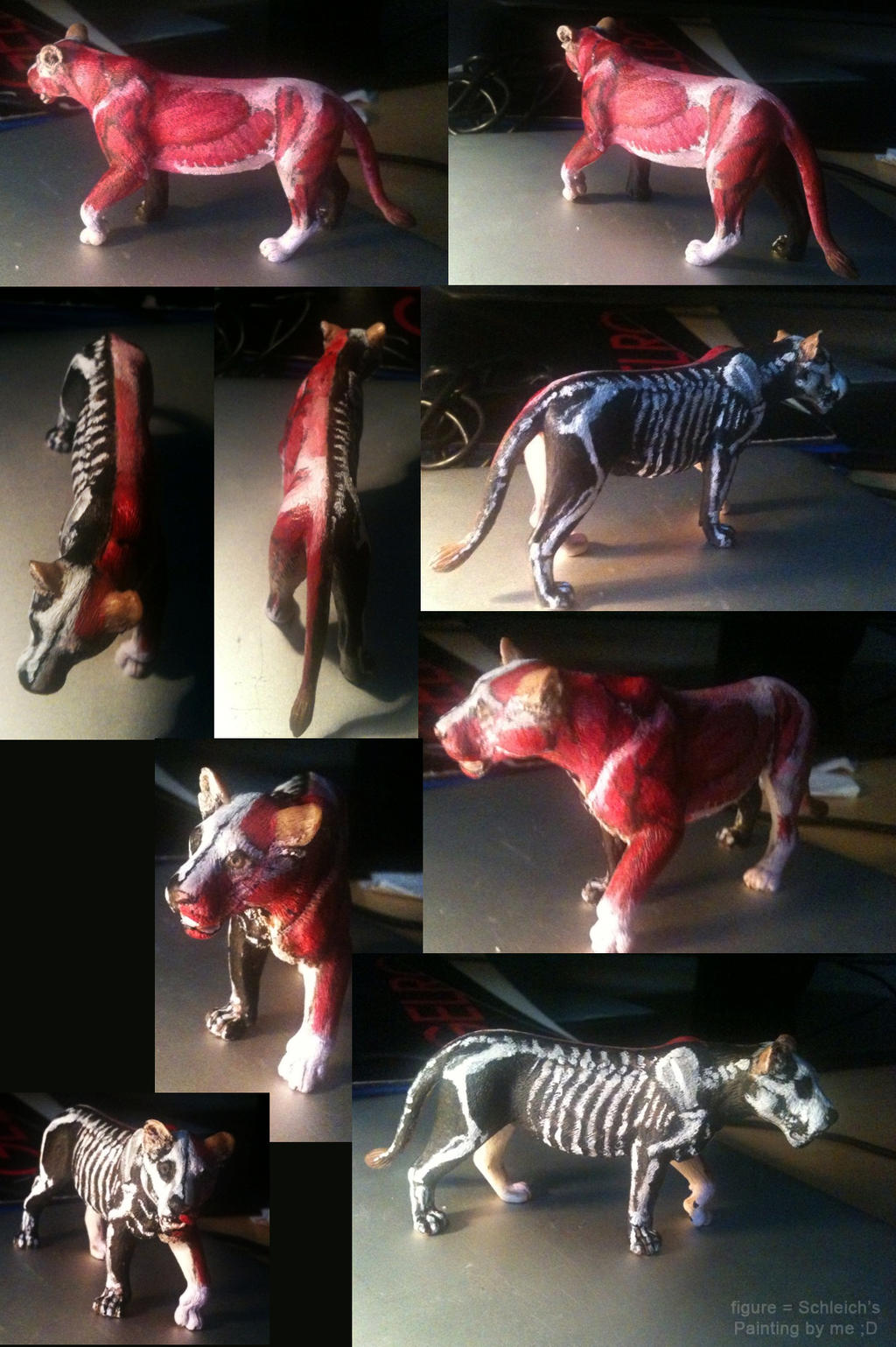 Anatomy Lioness Figure by NadiavanderDonk