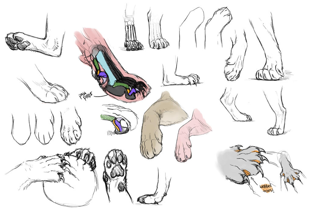 Feline paw studies by NadiavanderDonk on DeviantArt
