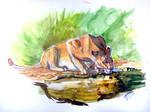 Watercolor - Lion