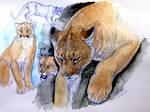 Watercolor- Cougar