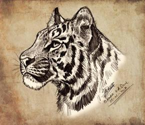 Tiger Pencil Sketch