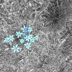 Tinted weeds by bucksco18966