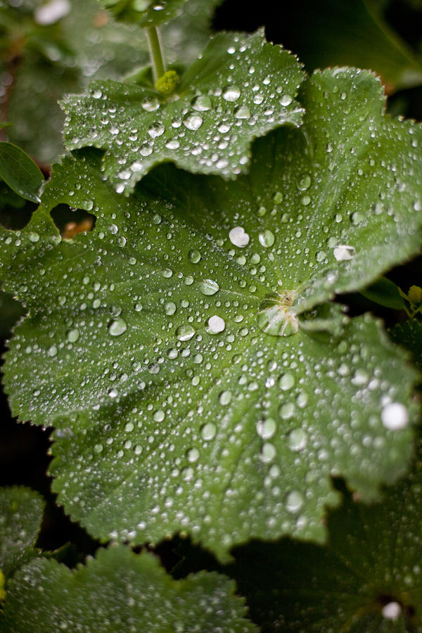 Leaf  meets rain by Harlekin-Photos