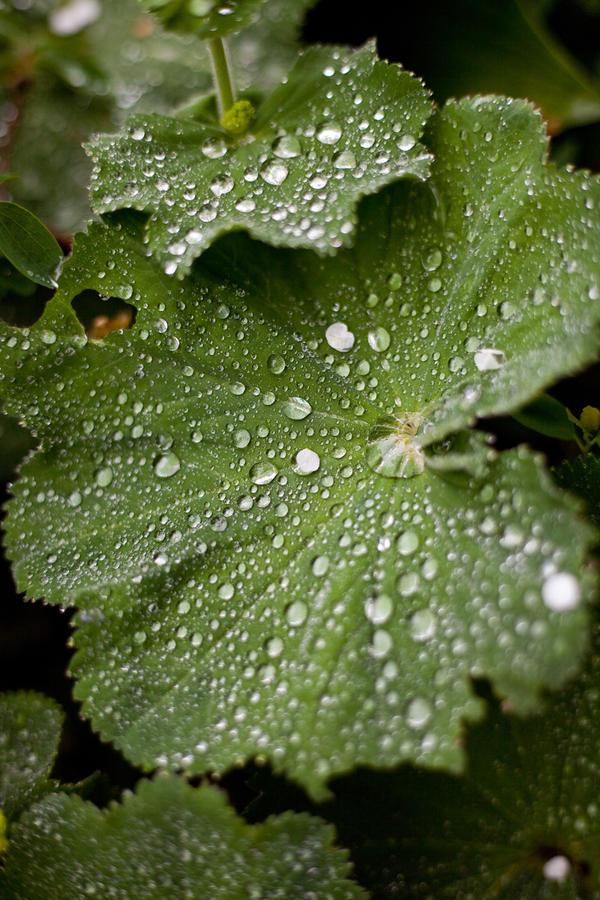 Leaf  meets rain by Harlekin-Photos