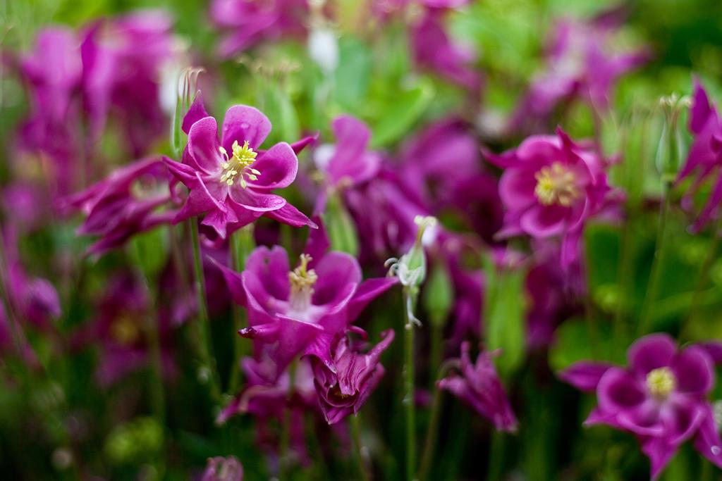 Spring Flowers by Harlekin-Photos