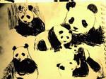 old panda sketch