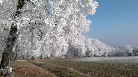White Trees by callmenotwo