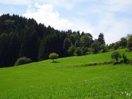 green Landscape by callmenotwo