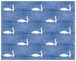 Swan lake by callmenotwo