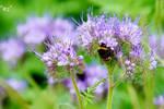Bee's Heaven