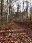 Walk On Leaves