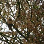 The Owl Tree by callmenotwo