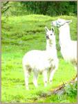 Poster Lamas by callmenotwo
