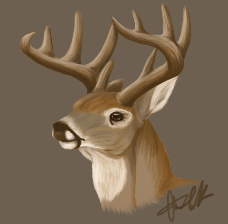 Whitetail buck by creepygoth666