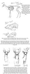 Basic Deer anatomy tutorial by creepygoth666