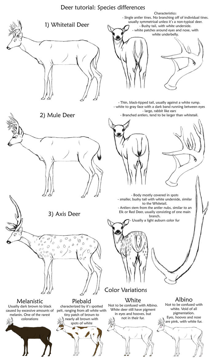Basic Deer Species Tutorial By Creepygoth666 On Deviantart