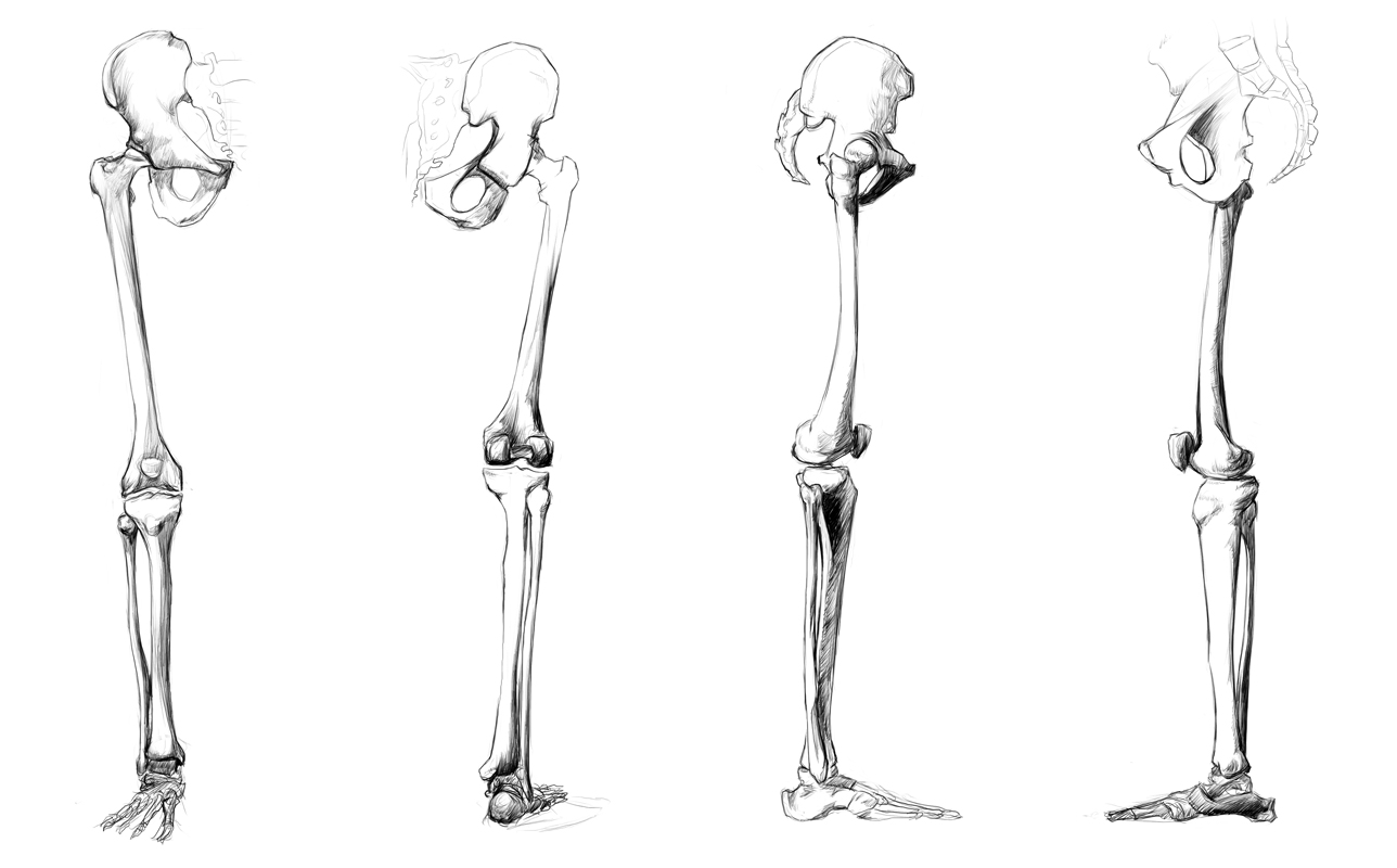 anatomy study - leg bones by call0ps on deviantart, Human Body