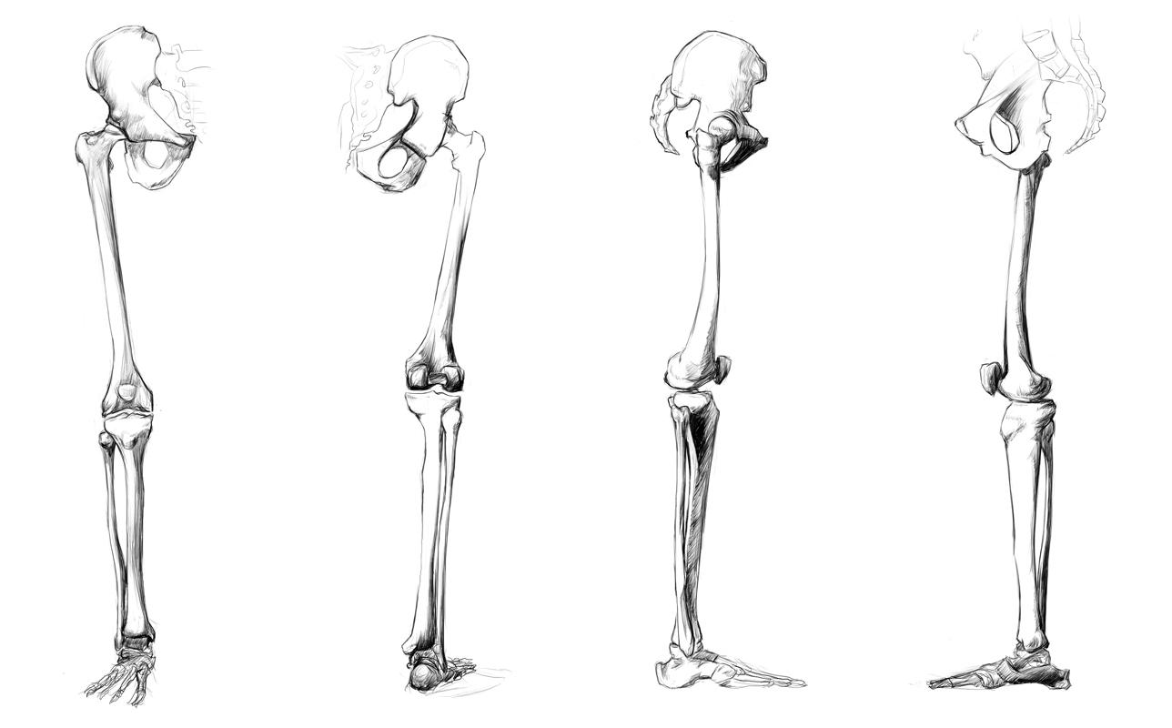 anatomy study - leg bones by call0ps on deviantart, Human Body