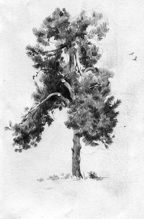Tree Sketch By Call0ps On Deviantart