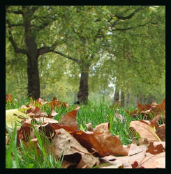 Leaves in the Park by enervation