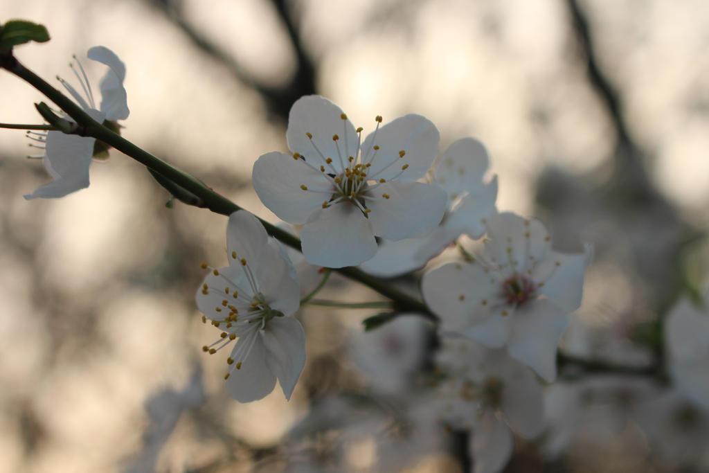 blossom of the night by IHanakoI