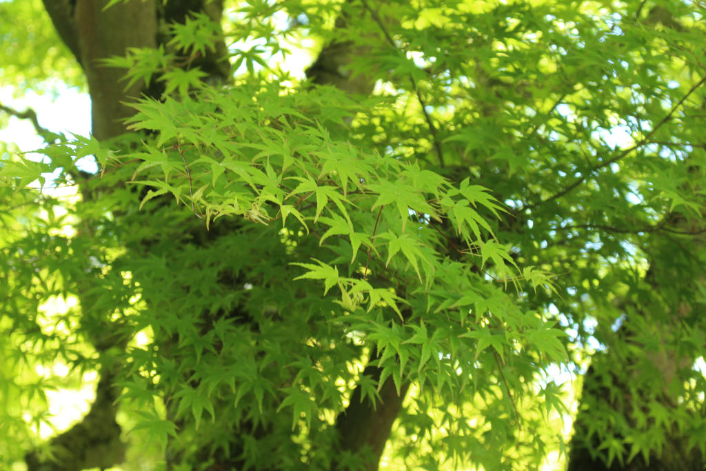 greens by IHanakoI