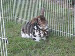 Rolly-Polly Bunny