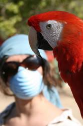 Bird Flu by scripturemonkey