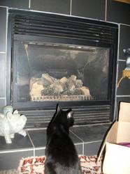 Fireside cat by wolfyknight