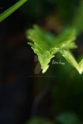 Gentle Branches II