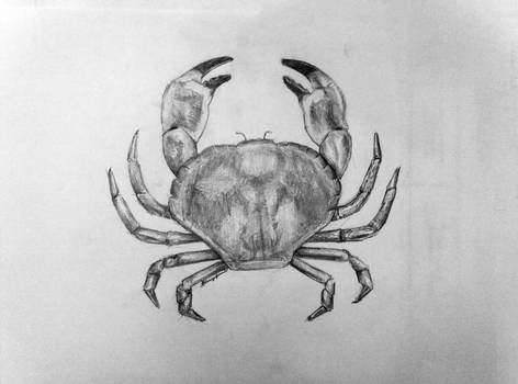 Croquis du jour : Crabe