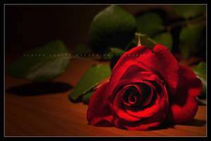 Rosa rosae rosae rosam rosa... by Cloxford