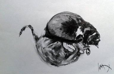Cats Charcoal