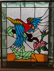 Parrot by lenslady