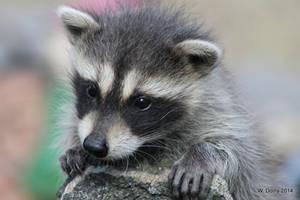 Mini Bandit by lenslady