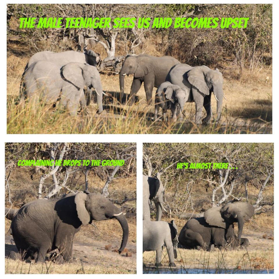 Africa Elephant Temper Tantrum by lenslady