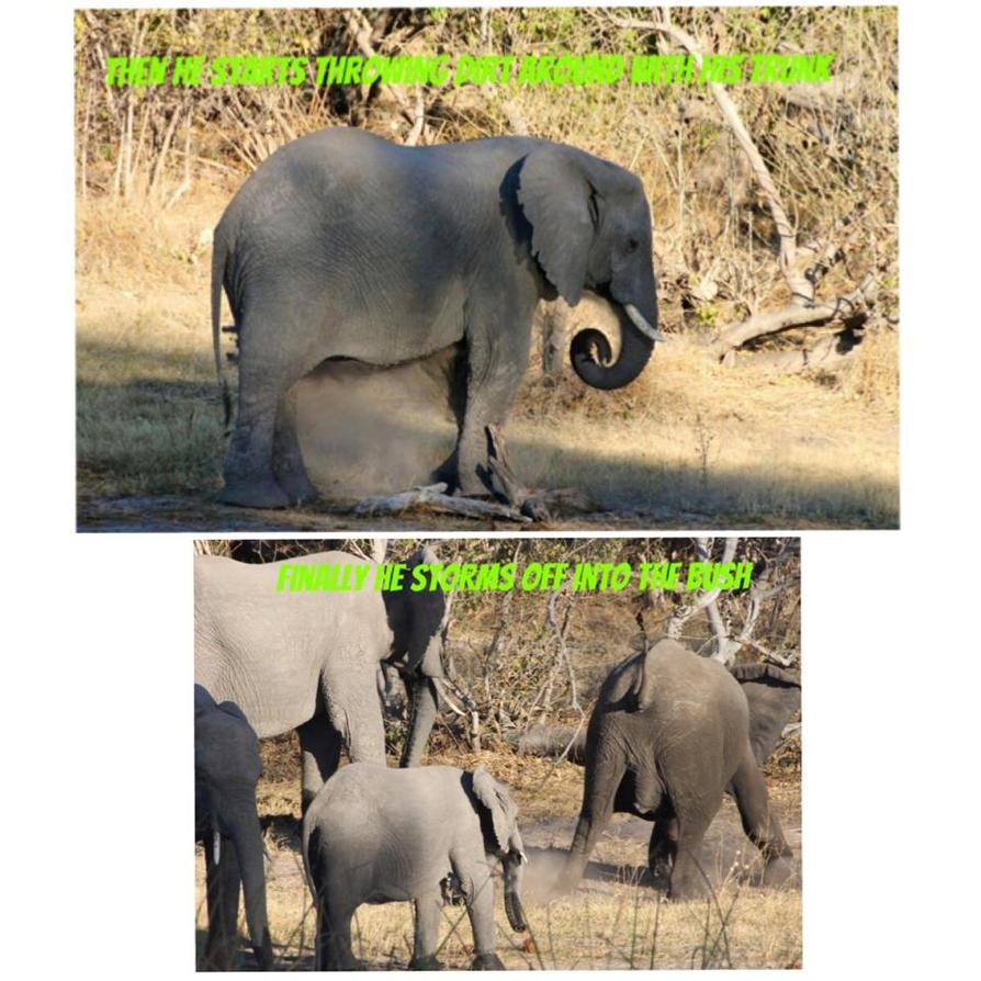 Africa Elephant Temper Tantrum 3 by lenslady