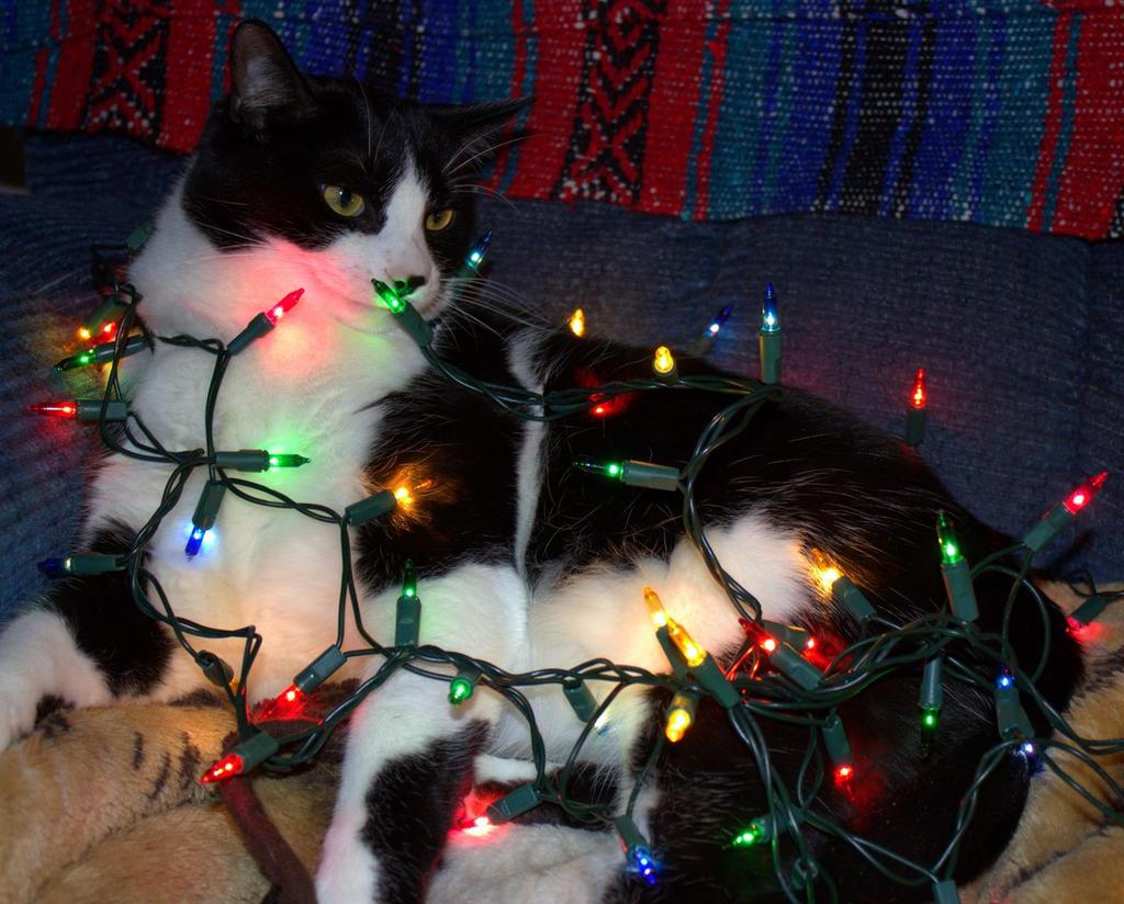 Christmas Kitty by lenslady