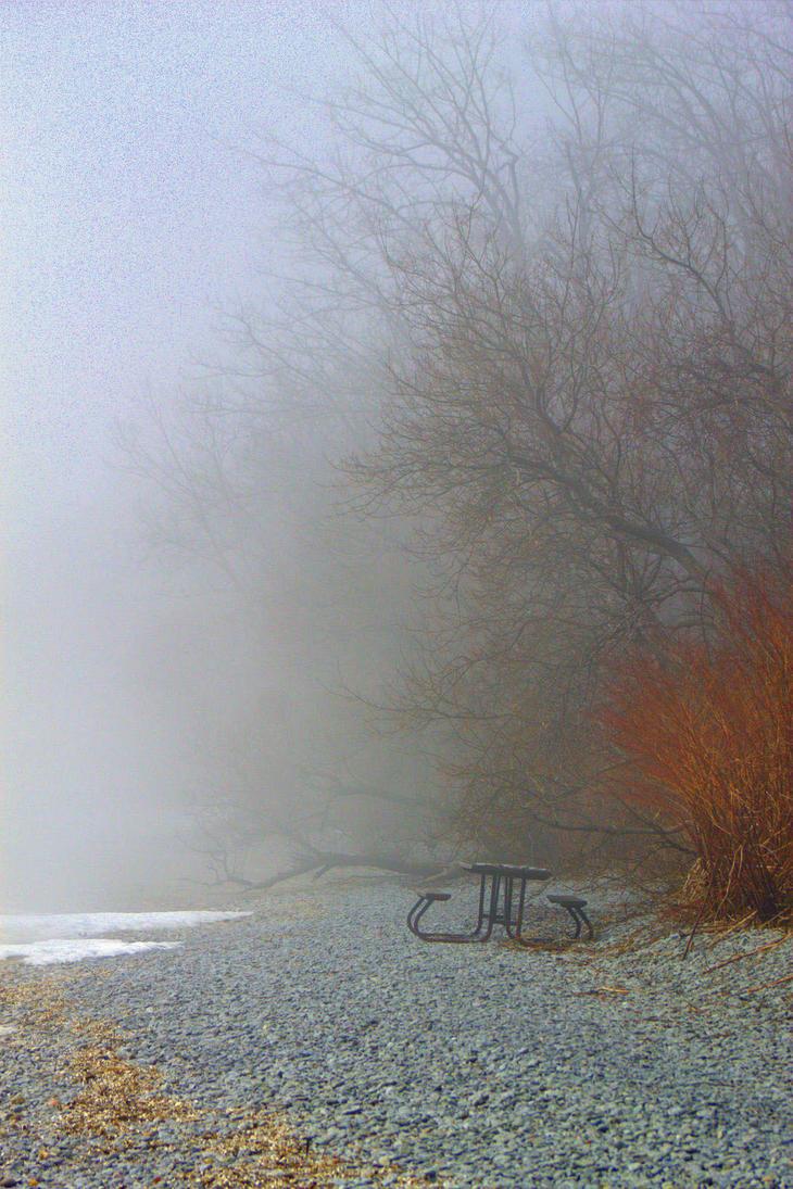 Afternoon Fog by lenslady