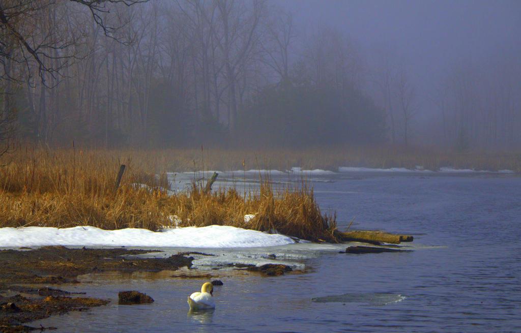 Misty by lenslady