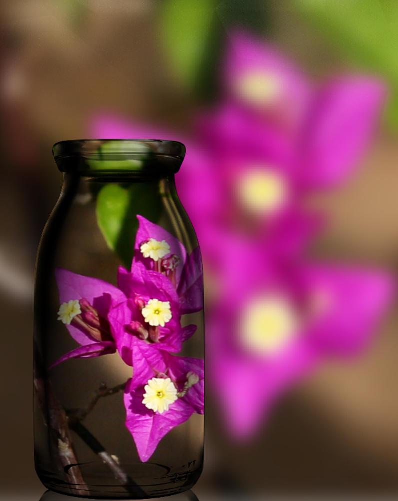 Reflection by lenslady