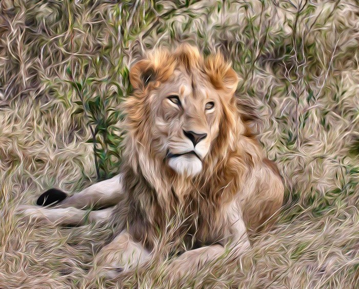 PAINTED LION by lenslady