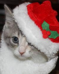 CHRISTMAS TILLY by lenslady