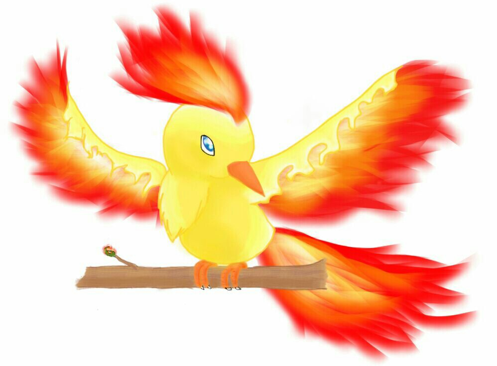 Baby Moltres By Foxyfoxdie On Deviantart