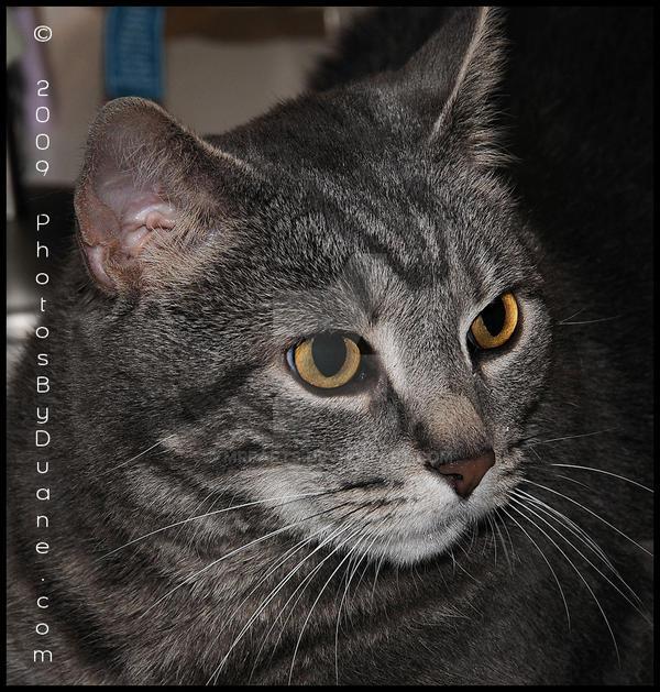 My cat 2 by MrParts