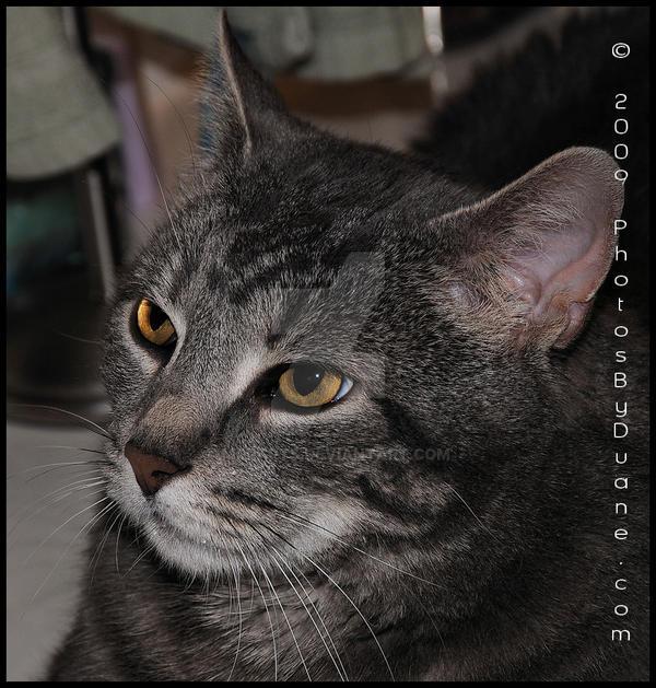My cat 3 by MrParts