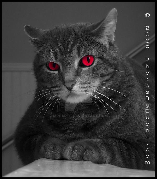 Devilish Kitty by MrParts